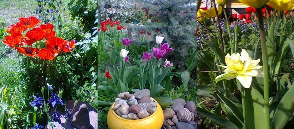 Райский уголок в саду Натальи Петровны Ган